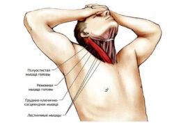 мышци шеи