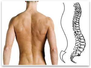 ровная спина