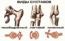 виды суставов