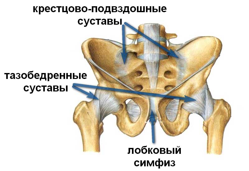 самый активный сустав